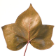 Hedera Leaves