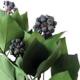 Hedera Arborea with Fruits