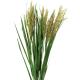 Plume Grass